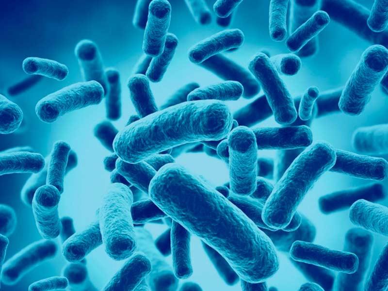 Efectos del suplemento de probióticos en pacientes con diabetes mellitus tipo 2: metaanálisis de ensayos aleatorizados