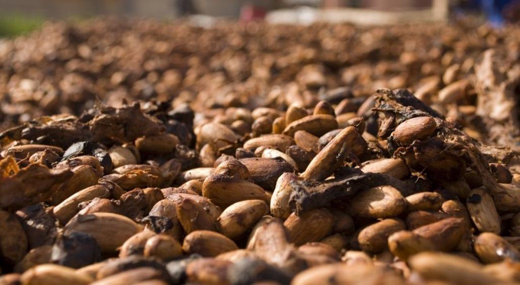 Manteca de cacao