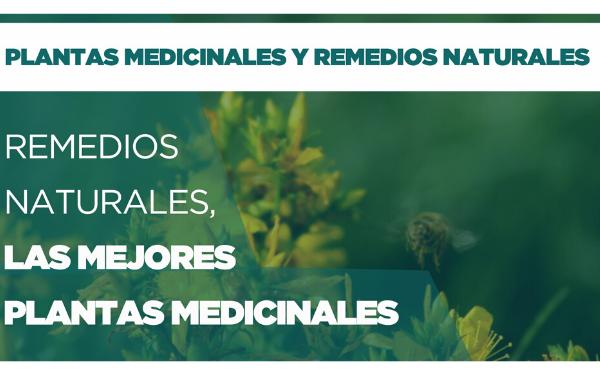 Remedios Naturales: las mejores plantas medicinales
