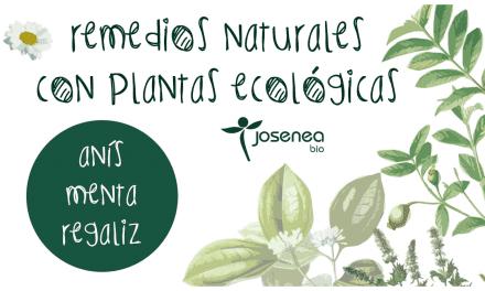 Remedios naturales con plantas ecológicas: anís, menta, regaliz