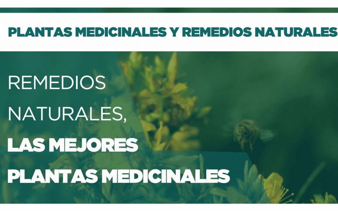 Remedios naturales, las mejores plantas para tu salud. Parte 1
