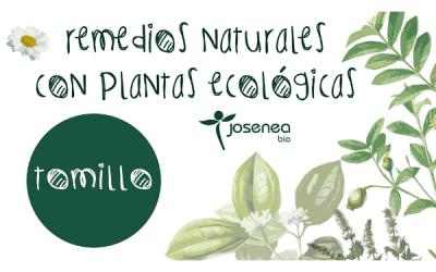 Remedios naturales con plantas ecológicas: Tomillo