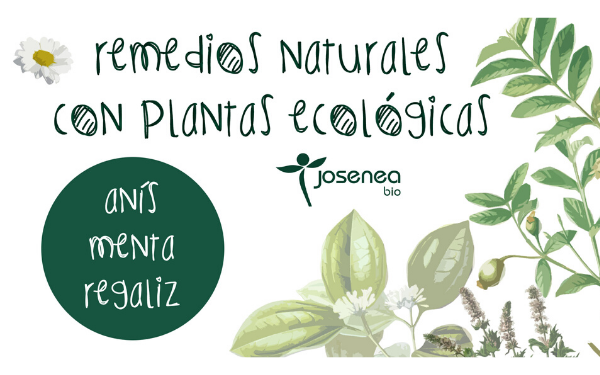 Remedios naturales con plantas ecológicas: Té Verde Hierbabuena