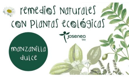 Remedios Naturales con plantas ecológicas: Manzanilla dulce