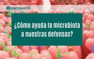 Cómo ayuda la microbiota a nuestras defensas
