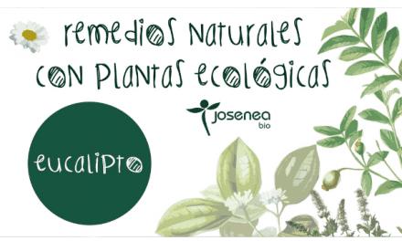 Remedios naturales con plantas ecológicas: Eucalipto